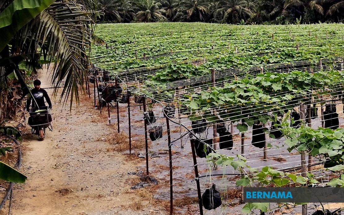Bernama Government Grants Lifeline To Young Agropreneurs